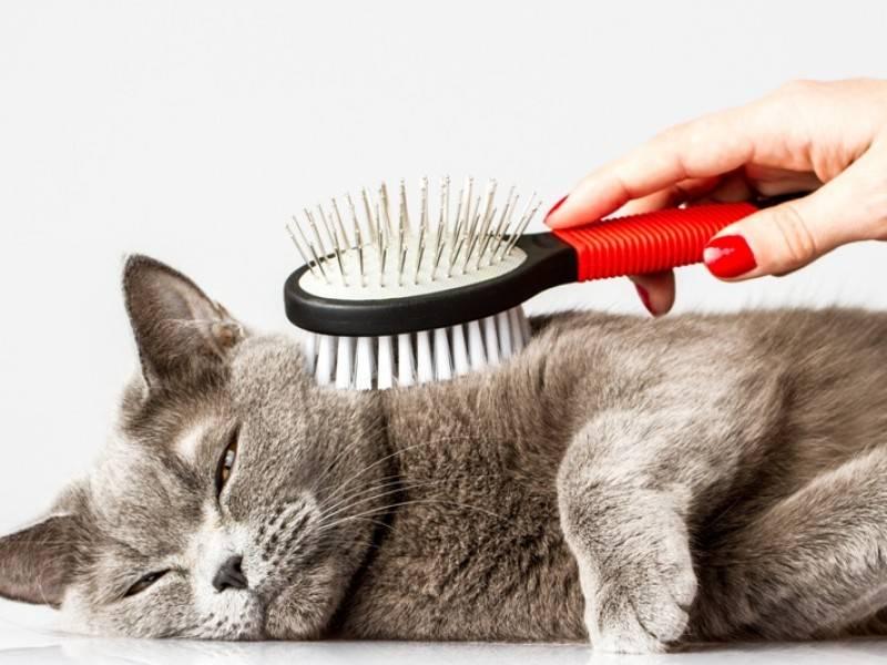 Cortar el pelaje de los gatos