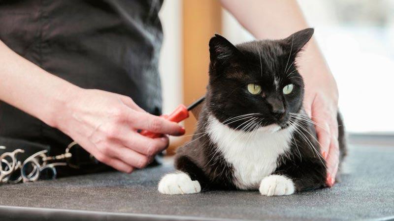 Cortar el pelaje del gato